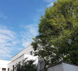 Haus Wittgenstein mit Baum. Fotos nur von außen. #hauswittgenstein #openhousewien @open_house_wien #erdberg #wien #vienna #wien #architektur #architecture...