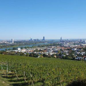 #Weinwandern 😎 #weinwandertag #wien #sturmzeit #wandern #sundayafternoon #vienna Nussdorf, Wien, Austria