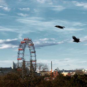 #vienna #riesenrad #birds #photooftheday