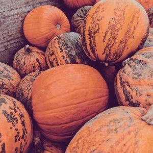 Wahrscheinlich kann ich spätestens Ende Oktober keinen Kürbis mehr sehen. Der Wunsch nach Krübissuppe ist  jedenfalls nicht mehr so groß 😂 . . . . . . . #mamablogger_at #kürbis #autumnmood #simpleliving #pumpkin #halloween #naturelover #orange #october