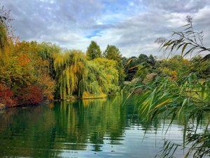 #kurparkoberlaa #autumn #vienna #beautifulvienna #beautifulaustria #colorful