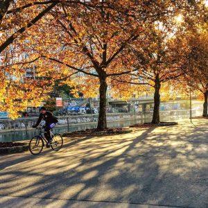 Der Moment, wenn die Sonne plötzlich durch den herbstlichen Blätterwald taucht 😊🚲🍁🍂 #fahrradwien #igersvienna #biketowork #warumfährstdunicht Vienna