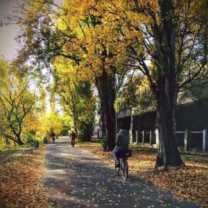 Wow, diese Farben! 🍂🍁😊 #biketowork #fahrradwien #warumfährstdunicht #igersvienna #autumninvienna Vienna