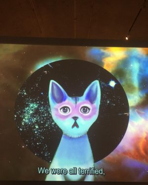 wisdom kitty #underpressure Pinar Yoldas vid. Kitty AI