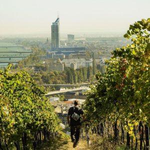 Wow, was für ein schönes Herbst Wochenende! Wir waren in den Wiener Weinbergen. Wo wart ihr unterwegs?...
