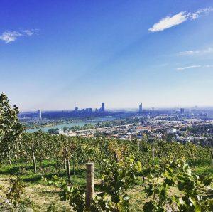 Wien an der Donau und am Fuße des Weinbergs #igersvienna #nussberg #donau #bluesky #oktober