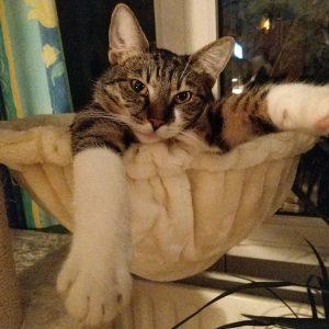 Heidi wünscht eine gute Nacht Heidi wishes good night #heidi #katze #cat #catlover #catsoninstagram #katzenliebe #katzenbilder #ig_cats...