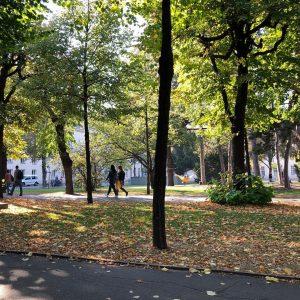 🚶🏿♂️🚶🏼♀️ Campus Spaziergänge ☺️ Und wie verbringt ihr euren Nachmittag? 🌞🌞🌞 #sprachenwien #herbst #autumn #autumnsun #languagelearning #universität...
