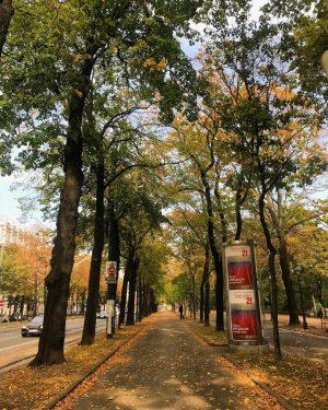 Quem aí também ama o Outono?🍁