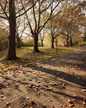 Herrlich unaufgeräumte Herbstwege im Kurpark 🐿🍂🍁 #HerbstWeg #SpazierenInWien #FallLove #HerbstSonne #AutumnColors #HerbstSpaziergang #KurparkOberlaa #WienFavoriten #ZehnterHieb #1100Wien #Favoriten...