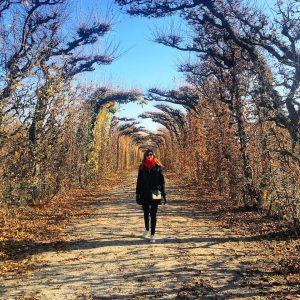 #Vienne - Pas d'impératrice. 🍁 #jardin #garden #automne #autumn #instaday #instapic #nofilter / #vienna #wien #wien_love #igerswien...