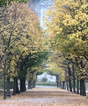 Der Herbst ist da🍂🍁 the autumn is here... #wien #vienna #augarten #amazing #herbst ...