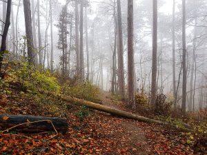 Another one! 🌫 . . . . #fog #foggy #foggymorning #nebel #wood #wald ...