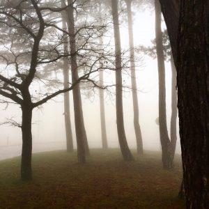Treason fog . Follow @dailykahlenberg for more 📷 . #dailykahlenberg Kahlenberg