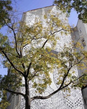 #urban #urbandecay #urbanphotography #tree #graffiti #wallart #art #graffitiart #viennalove #bluesky #citygram #igersaustria #igersvienna #wonderlustvienna #november #wienmalanders #photography...