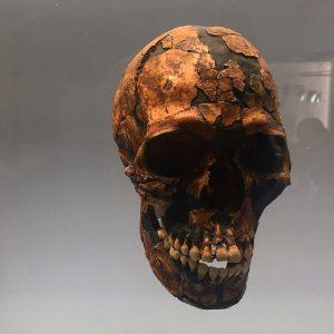 Skull, exploring history #museum #history #nature #naturalhistorymuseum #vienna #funtime