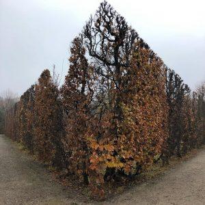 Autumn geometry #nature #geometry #timeless #fall