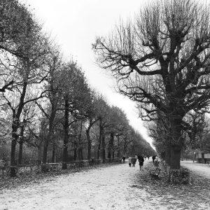 Winter in #schönbrunn #wien #vienna