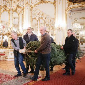 🌲 Voller Einsatz! Die Christbaumbauern, der Bürgermeister und der Amtsleiter aus Pennewang/OÖ bringen den Christbaum für die...