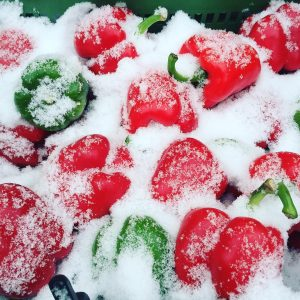 Paprika in the Snow #bellpapper #paprika #snowwhite #yppenmarkt