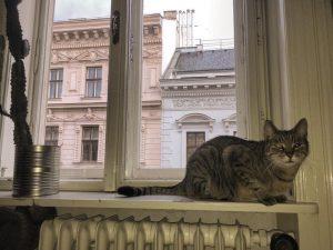 Enjoying the view of Vienna! #viennaaustria #cats #cat #catsofinstagram #catlover #instacat #catstagram #instagram #love #cute #pets #catlovers...