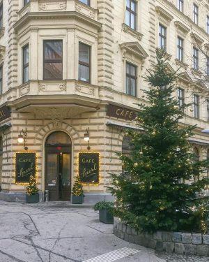 #cafesperl #vienne #vienna #christmas #christmasstree #noel #sapindenoel