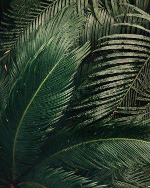 The ancient Cycads 🖤 . . . #pflanzen #garten #botanischergarten #pflanzenliebe #botany #botanical #botanicgarden #gardenlife #gardensofinstagram #plantsofinstagram...
