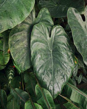 🖤 Some nice leaves 🖤 . . . #leaflove #plantae #foliage #horticulture #botany #urbanjunglebloggers #botanischergarten #botanic #botanicalpickmeup...