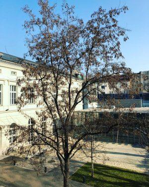 We ❤️the sunny weather... Universität für Musik und darstellende Kunst Wien