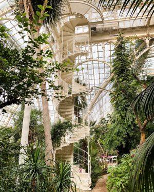 It's Monday but it's ok 😅 . . . #garten #plantstagram #tropicalplants #indoorplants #indoorgarden #pflanzen #pflanzenliebe #gartenliebe...