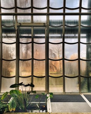 Have a great weekend, everyone! . . . #plantsmakepeoplehappy #plantsarefriends #garten #greenlife #windowsill #glasshouse #greenhouse #gardenlife #garden_styles...