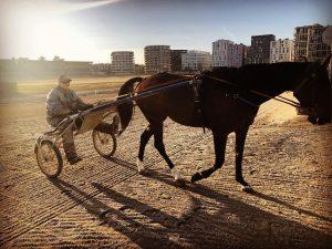 #horseracing #jockey #sunset #krieau #vienna Trabrennpark Krieau