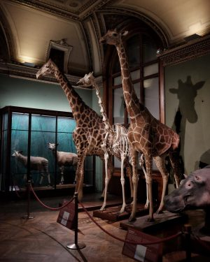 Night at the museum 🦒💀