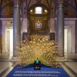 Happy Monday Morning! This beautiful peacock currently resides in the MAK Columned Main Hall as part of...
