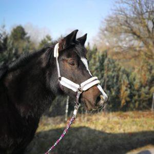 Sammy beim spazieren gehen #sammy #ponyhof #pony #horse #pferdehof #pferderunde #lobau #daslebenisteinponyhof #sonne