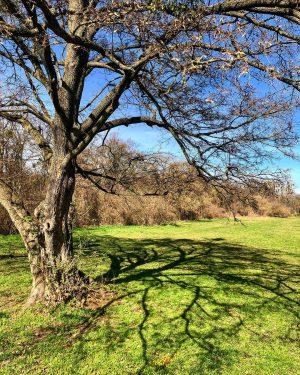 Frühling in Wien 🤗 #prater #Praterhauptallee #wien2 #leopoldstadt frühling #springday #frühlinginwien #endlichwarm #schatten #bäume #energie #energy #trees...