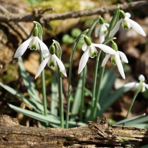 Frühling#Lobau Lobau