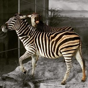 Our zebras are ready for some fun! Are you? April Fool's Day is ...