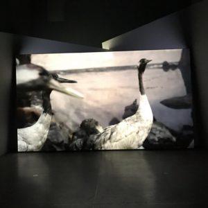 Gerard Byrne, Jielemeguvvie guvvie sjisjnjeli (Film Inside an Image), 2016 #gerardbyrne #jielemeguvvieguvviesjisjnjeli #filminsideanimage ...