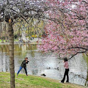 #austria2019 #austria🇦🇹 #wien #vienna #stadtpark #park #spring #springtime