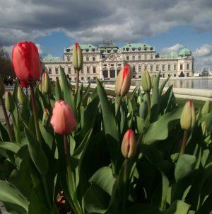 #belvedere #belvederesuperiore #klimt #schiele #tulipani #springiscoming #artislife #weddinginbelvedere #igvienna #vienna_city #day2(or20)