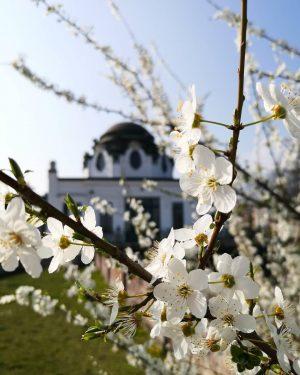 Das erste Aprilwochenende steht vor der Tür und das bedeutet: der Otto Wagner ...