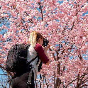 A woman takes pictures of a blooming Japanese cherry blossom tree in Vienna.⁣ ...