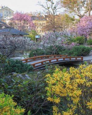 Unser Geheimtipp für das Wochenende: Der Setagayapark hat seit Anfang der Woche seine Pforten geöffnet. 🌺🌸 Aufgenommen...
