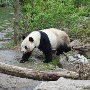 Schönbrunn Zoo #Vienna #Austria