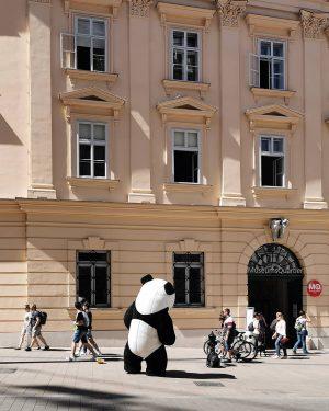 Schnorrpanda #wien#vienna#vienne #austria#igersvienna #igersaustria#panda #mq#museumsquartier #streetsofvienna#meinwien #wiennurduallein#wienliebe #peopleofvienna#schnorren #pandakostüm#costume #citylife#großstadtleben #mahü#mariahilferstraße #neulichimsechsten #vienna_austria ...