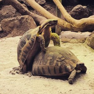 Turtle love! ❤️