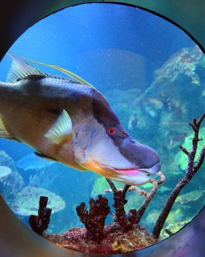 Here's looking at you 🐠 When walking to the top floor shark tank, you'll meet a curious...