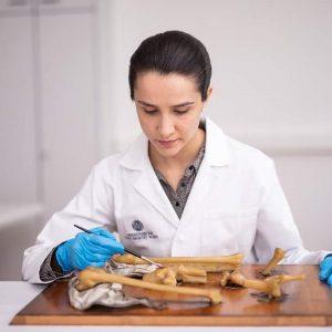 Unsere Restauratorin @ work🖌 Martina Peters ist auf Wachs spezialisiert und betreut die Sammlungen der anatomischen Wachsmodelle🧠👀👣...