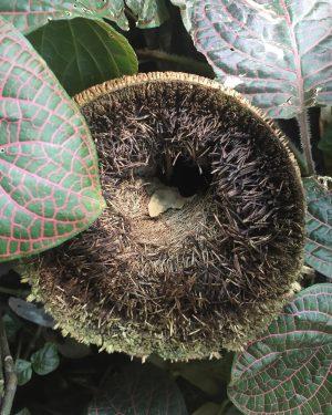 rabbit hole #bambooroots #insidetherabbithole #greencreatures #botanicalgardens #oasisinthecity #flora #bamboo #belvedere #botanischergartenbelvedere
